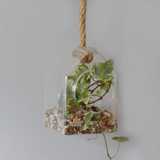 All Glass Terrarium - Hanging House on Rope