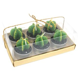 Set of 6 Monks Cactus Tealights in Gift Box